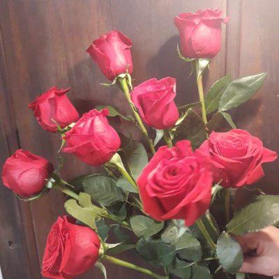 VERO-1-9-roses.jpg