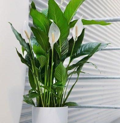 plante interieur 1